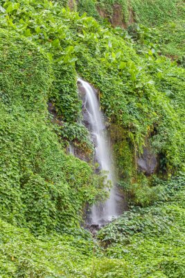 Posters Paroi humide et verdoyante, Anse des Cascades, île de la Réunion
