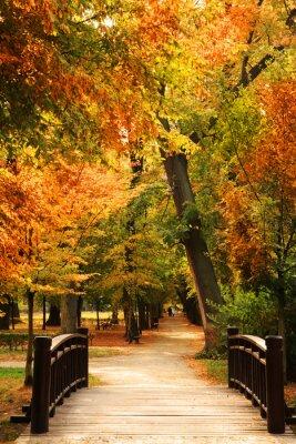 Posters Pasarela parque del otoño