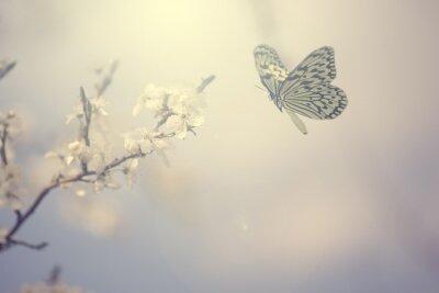 Posters Pastel photo colorée de papillons et de fleurs printanières