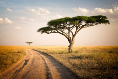 Posters Paysage africain - Tanzanie