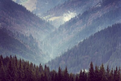 Posters Paysage, montagne, forêt, collines