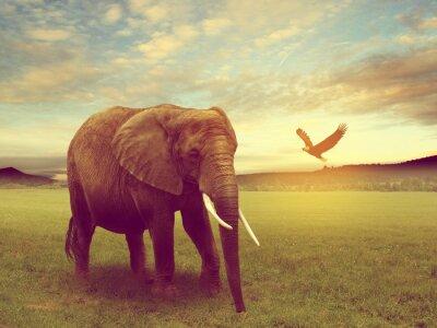 Posters Paysages comprenant une Afrique éléphant