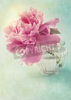 Posters Peony flower in a vase
