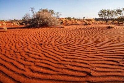 Posters Petites plantes dans le désert de l'Australie occidentale