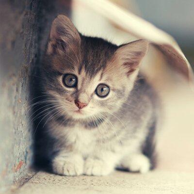Posters Peu, mignon, chaton, siting, Dehors