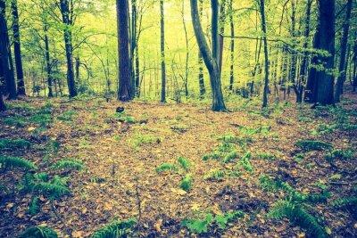 Posters Photo ancienne de paysage de forêt automnale