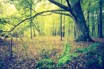 Posters Photo vintage de paysage de forêt automnale