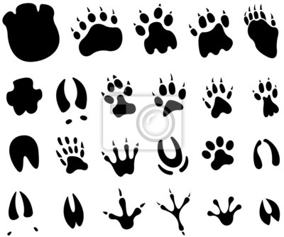 pied animal