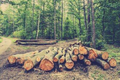 Posters Pile de bois dans la forêt par la route, photo vintage.