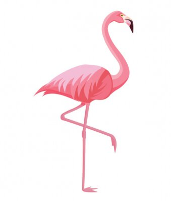 Posters Pink flamingo on a white background. Vector illustration.