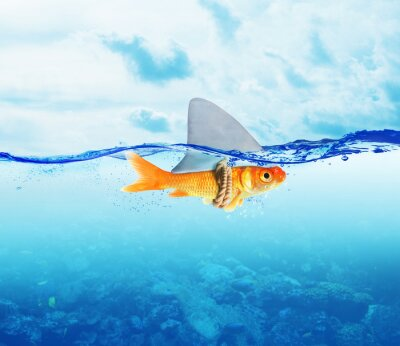 Posters Poisson rouge comme requin