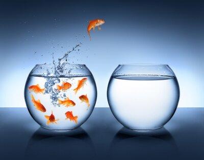 Posters poisson rouge sautant - l'amélioration et la carrière notion