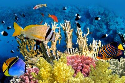 Posters Poissons tropicaux et les récifs coralliens