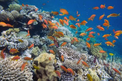 Posters Poissons tropicaux sur les récifs coralliens