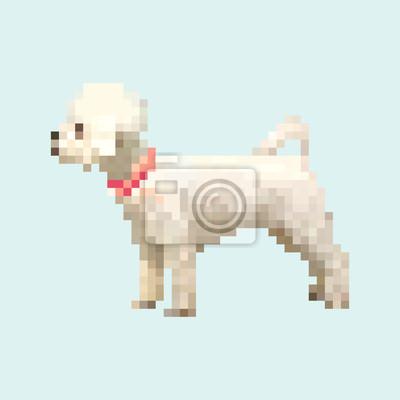 Posters Poodle Chien Pixel Art Vecteur Isolé Animal