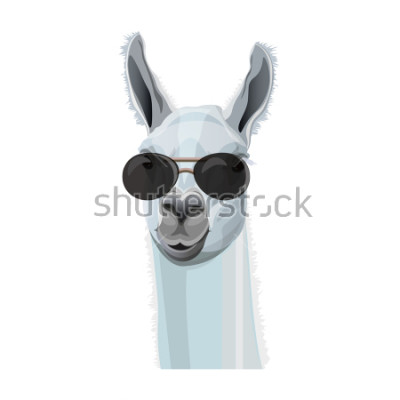 Posters Portrait comique de lama à lunettes noires. Illustration vectorielle isolée sur fond blanc