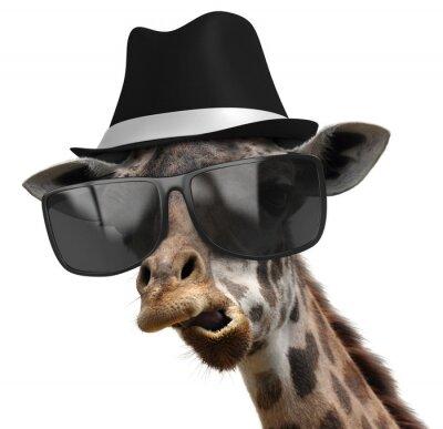 Posters Portrait drôle d'animal d'une girafe avec des nuances et Fedora