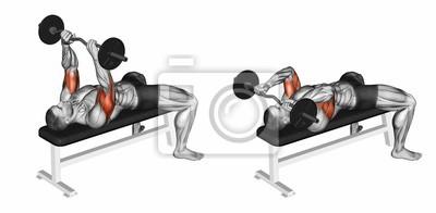 Posters Presse française avec une haltère allongée. Exercice pour la  musculation Les muscles cibles sont 946bc25002d