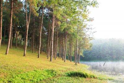 Posters Rayons de soleil dans Natural Woodland Spruce