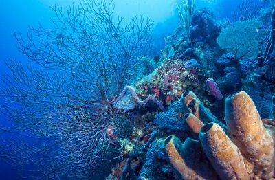 Posters Récif de corail sous-marin
