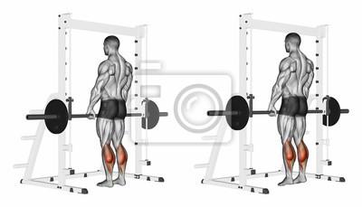 Posters Relevez les orteils avec une barre. Exercice pour la musculation  Les muscles cibles sont 9a7a2e5a301