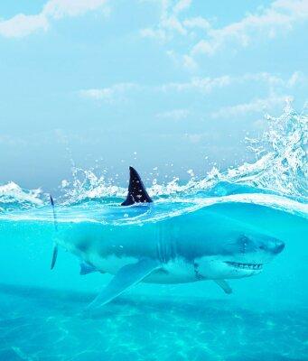 Posters Requin sous l'eau, illustration 3d