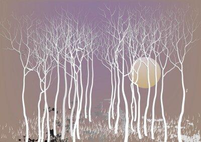 Posters Résumé, forêt, Arbres, dehors, congé, lune, nuit, temps, vision ...