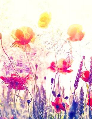 Posters Résumé nature floue fond, prairie d'été au lever du soleil.