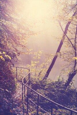 Posters Retro filtré image d'un chemin dans la forêt.