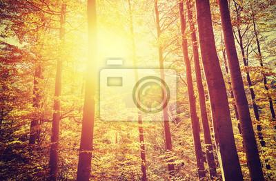 Posters Rétro, tonique, image, automnal, forêt, Coucher soleil