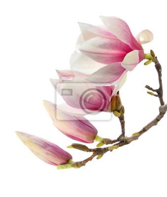 rouge magnolia