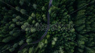 Posters Ruelle entre forêt, vue de drone