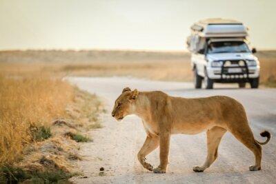 Posters safari africain