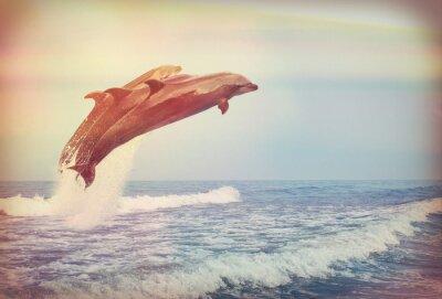 Posters Sauter, dauphins, instagram