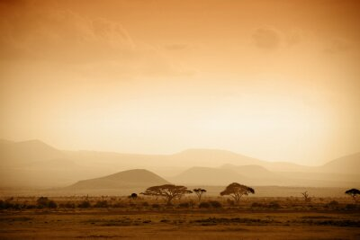 Posters savane africaine au lever du soleil