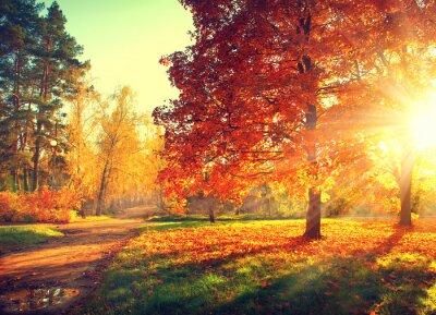 Posters Scène d'automne. Automne. Les arbres et les feuilles à la lumière du soleil