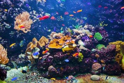 Posters Scène sous-marine avec des poissons, des récifs coralliens