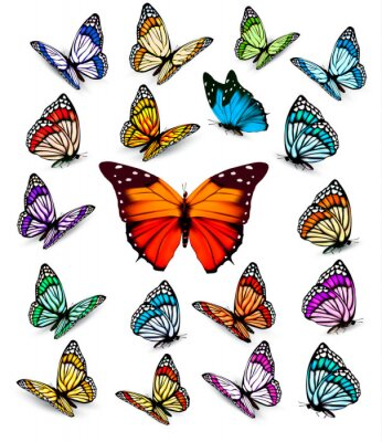 Posters Set of different colorful butterflies. Vector.