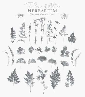 Posters Set of dried herbs and natural plants and bees - herbarium logo collection on white background