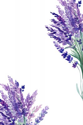 Posters set of lavender flowers elements on an isolated white background, watercolor illustration, hand drawing, greeting card with a place for text