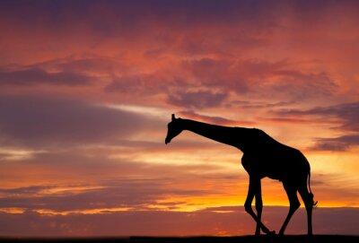Posters Silhouette d'une girafe contre un beau coucher de soleil