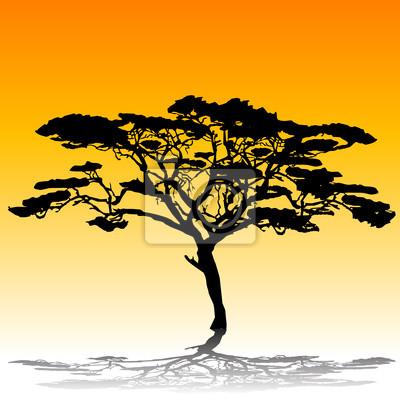 silhouette de l'arbre d'acacia