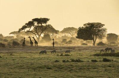 Posters Silhouette di giraffe