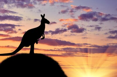Posters Silhouette, kangourou, bébé