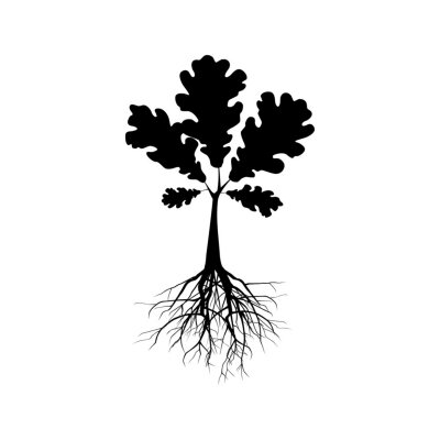 Posters Silhouette of oak tree. Illustration of a silhouette of oak tree on a white background