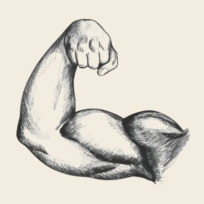 Posters Sketch illustration of muscular human male right arm