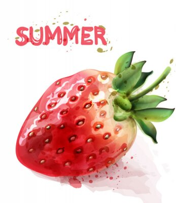 Posters Strawberry isolated Vector watercolor. Fresh fruit summer seasonal cards