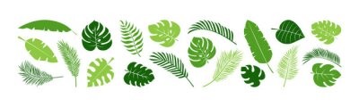 Posters Summer palm leaf vector green plant, exotic nature set isolated on white background. Jungle illustration