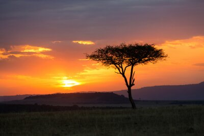 Posters Sunset in the Serengeti National Park, Tanzania, Africa