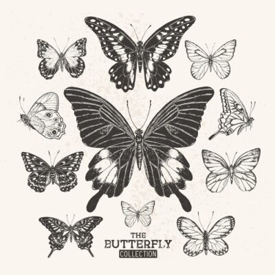 Posters The Vintage Butterfly Collection